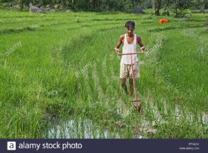 developpement  rural