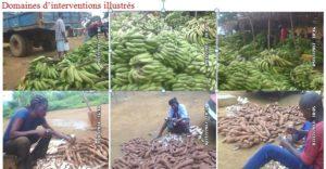 domaines   d'intervention, éliminer   l'insécurité  alimentaire  à kinshasa