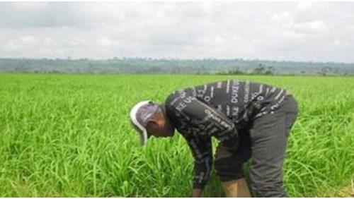 Comment éliminer le risque de l'insécurité alimentaire à Kinshasa