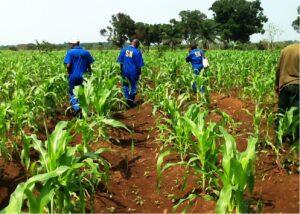 créer une entreprise en rdc-agriculture